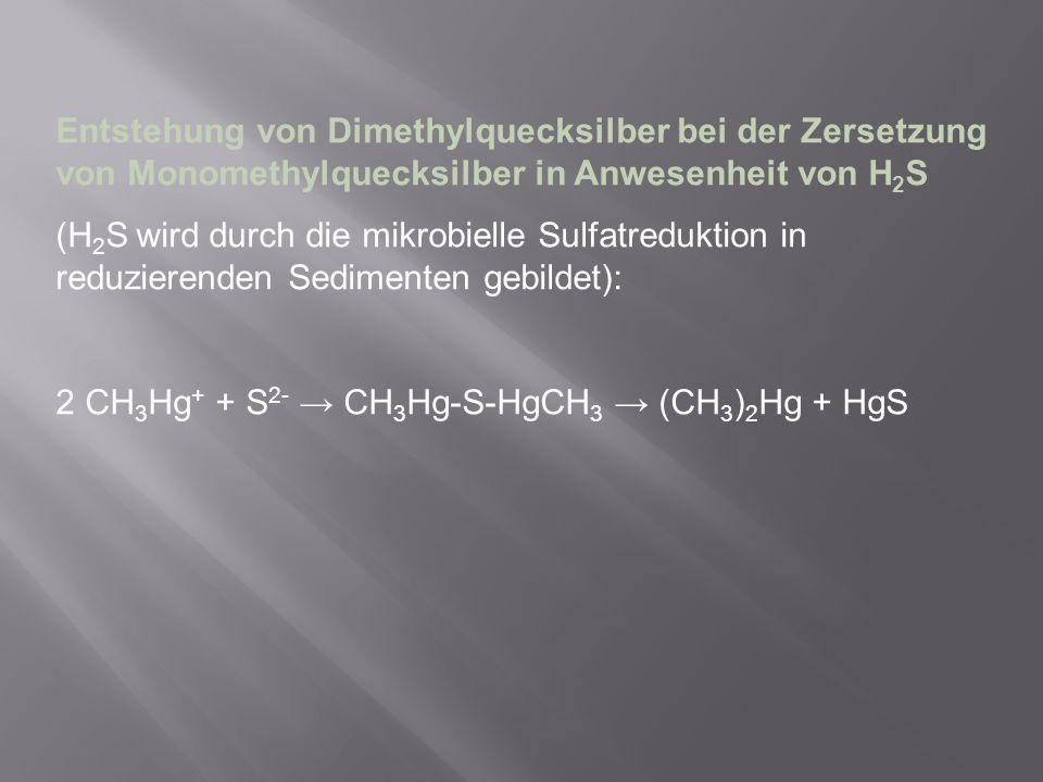 Entstehung von Dimethylquecksilber bei der Zersetzung von Monomethylquecksilber in Anwesenheit von H 2 S (H 2 S wird durch die mikrobielle Sulfatreduk