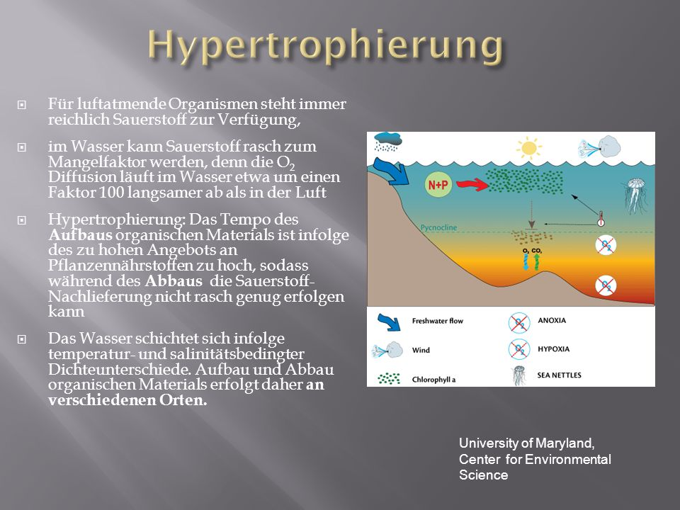 Für luftatmende Organismen steht immer reichlich Sauerstoff zur Verfügung, im Wasser kann Sauerstoff rasch zum Mangelfaktor werden, denn die O 2 Diffu