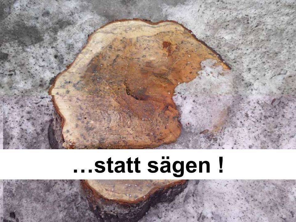 ….das muss besonders für unseren Altbaumbestand im Ortsgebiet gelten.