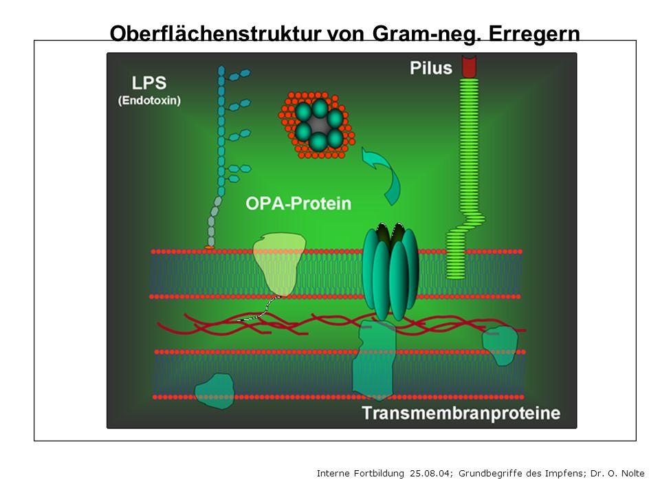 Interne Fortbildung 25.08.04; Grundbegriffe des Impfens; Dr. O. Nolte Oberflächenstruktur von Gram-neg. Erregern