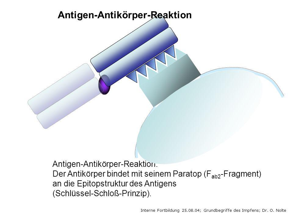 Interne Fortbildung 25.08.04; Grundbegriffe des Impfens; Dr. O. Nolte Antigen-Antikörper-Reaktion: Der Antikörper bindet mit seinem Paratop (F ab2 -Fr