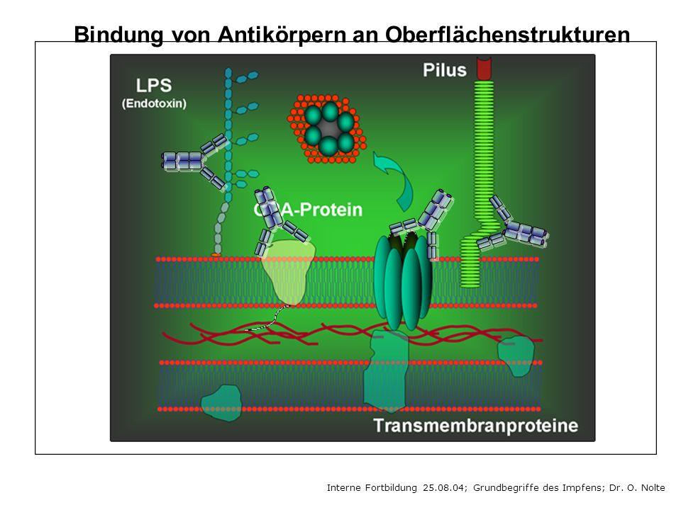 Interne Fortbildung 25.08.04; Grundbegriffe des Impfens; Dr. O. Nolte Bindung von Antikörpern an Oberflächenstrukturen