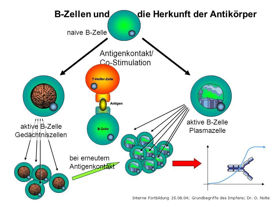 Interne Fortbildung 25.08.04; Grundbegriffe des Impfens; Dr. O. Nolte naive B-Zelle aktive B-Zelle Plasmazelle Antigenkontakt/ Co-Stimulation aktive B