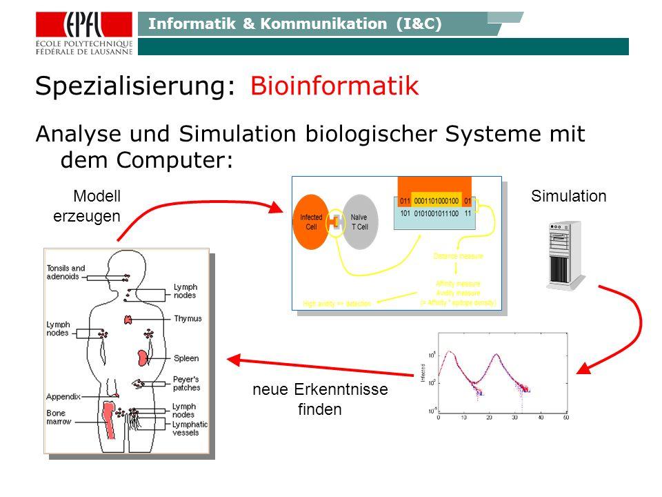 Informatik & Kommunikation (I&C) Anwendungen: Bioinformatik Verstehen, wie das Gehirn lernt Immuno- Suppressoren besser dosieren Evolution eines Pathogens durch genetische Analyse vorhersagen Durch Erforschen von DNA Datenbanken AIDS Therapie besser kontrollieren