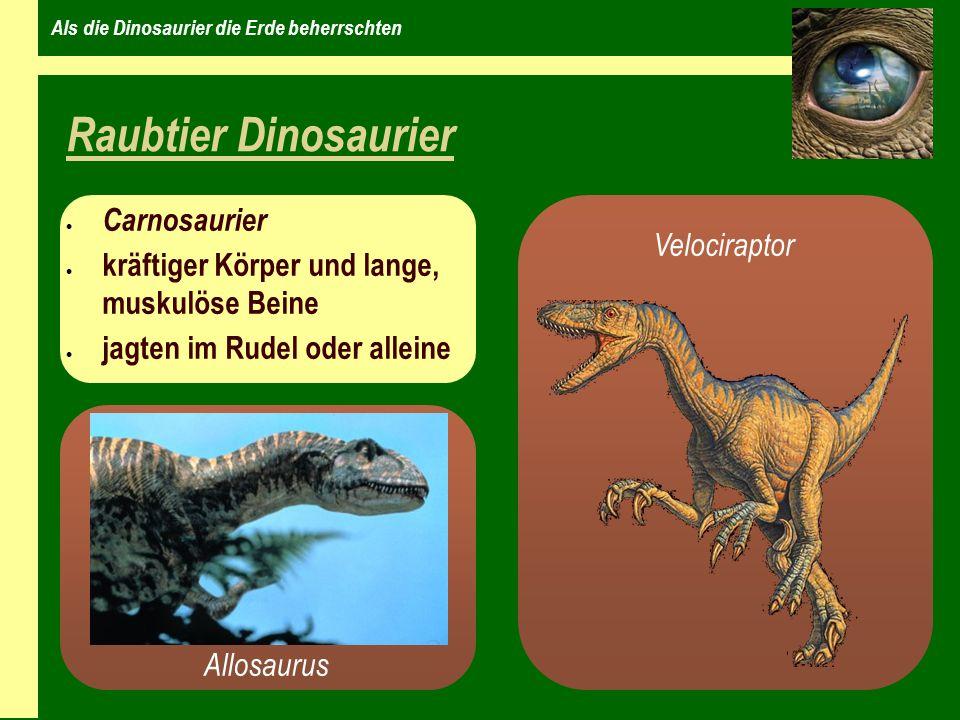 Als die Dinosaurier die Erde beherrschten Raubtier Dinosaurier Carnosaurier kräftiger Körper und lange, muskulöse Beine jagten im Rudel oder alleine Allosaurus Velociraptor
