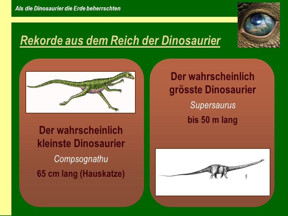 Als die Dinosaurier die Erde beherrschten Rekorde aus dem Reich der Dinosaurier Der wahrscheinlich kleinste Dinosaurier Compsognathu 65 cm lang (Hauskatze) Der wahrscheinlich grösste Dinosaurier Supersaurus bis 50 m lang