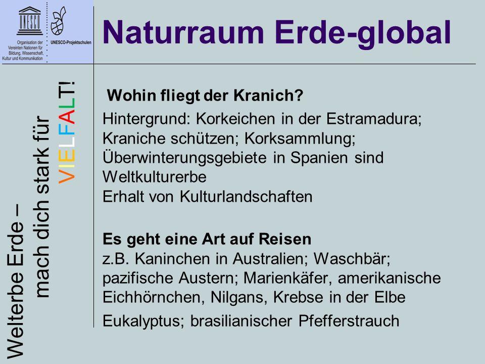 Wohin fliegt der Kranich? Hintergrund: Korkeichen in der Estramadura; Kraniche schützen; Korksammlung; Überwinterungsgebiete in Spanien sind Weltkultu