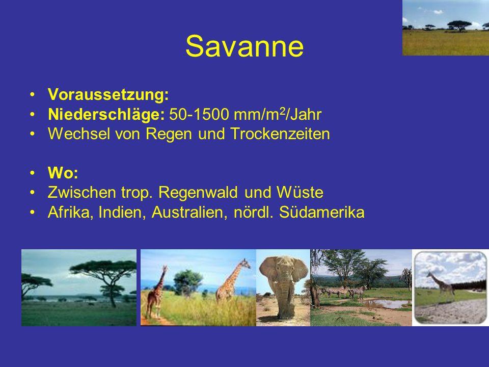 Savanne Voraussetzung: Niederschläge: 50-1500 mm/m 2 /Jahr Wechsel von Regen und Trockenzeiten Wo: Zwischen trop. Regenwald und Wüste Afrika, Indien,