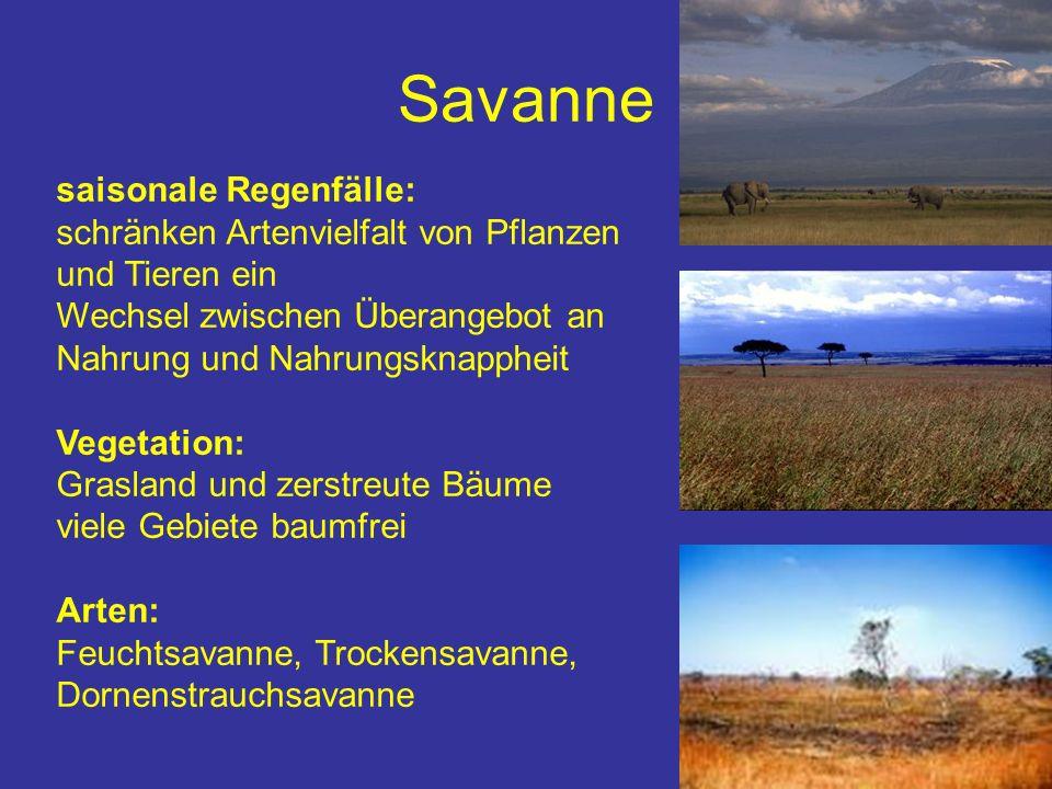Savanne saisonale Regenfälle: schränken Artenvielfalt von Pflanzen und Tieren ein Wechsel zwischen Überangebot an Nahrung und Nahrungsknappheit Vegeta