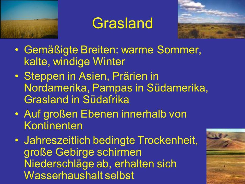 Grasland Gemäßigte Breiten: warme Sommer, kalte, windige Winter Steppen in Asien, Prärien in Nordamerika, Pampas in Südamerika, Grasland in Südafrika
