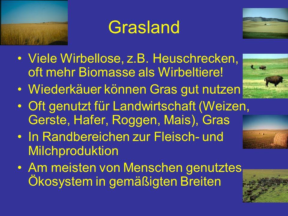 Grasland Viele Wirbellose, z.B. Heuschrecken, oft mehr Biomasse als Wirbeltiere! Wiederkäuer können Gras gut nutzen Oft genutzt für Landwirtschaft (We