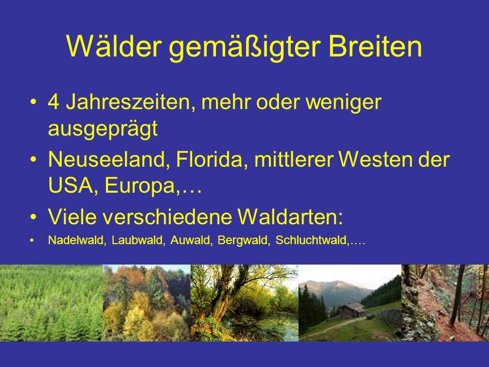 Wälder gemäßigter Breiten 4 Jahreszeiten, mehr oder weniger ausgeprägt Neuseeland, Florida, mittlerer Westen der USA, Europa,… Viele verschiedene Wald