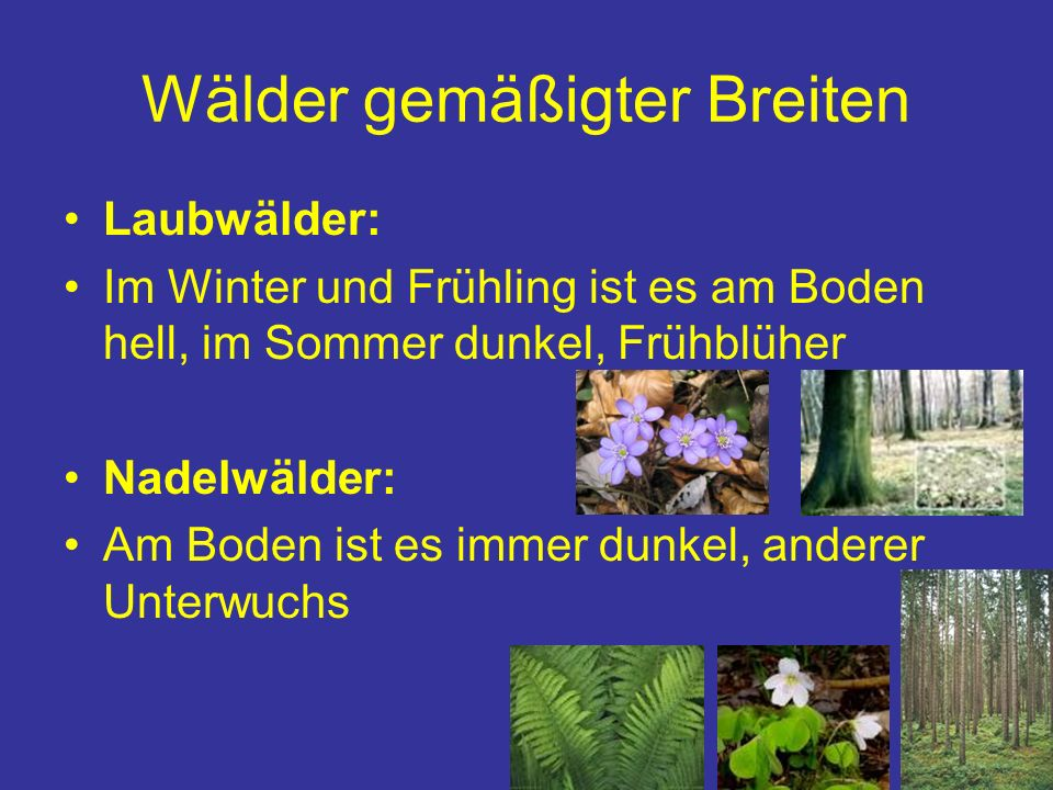 Wälder gemäßigter Breiten Laubwälder: Im Winter und Frühling ist es am Boden hell, im Sommer dunkel, Frühblüher Nadelwälder: Am Boden ist es immer dun