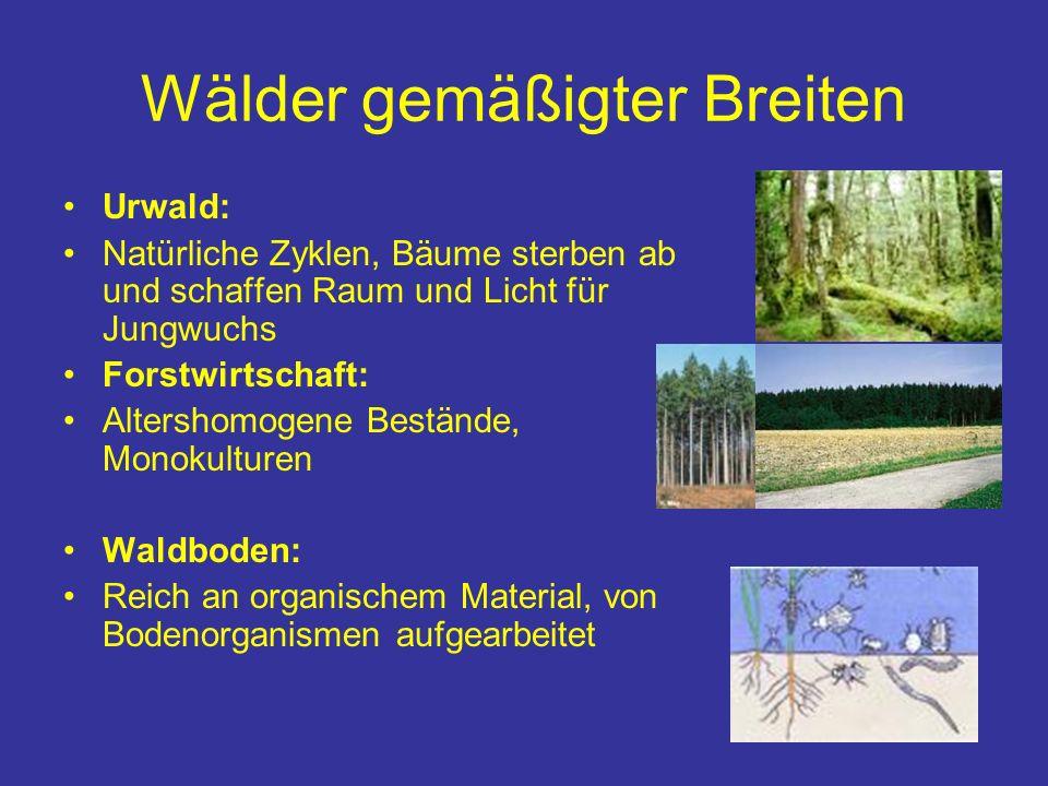 Wälder gemäßigter Breiten Urwald: Natürliche Zyklen, Bäume sterben ab und schaffen Raum und Licht für Jungwuchs Forstwirtschaft: Altershomogene Bestän