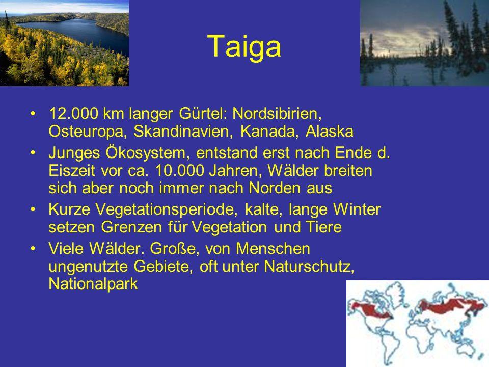Taiga 12.000 km langer Gürtel: Nordsibirien, Osteuropa, Skandinavien, Kanada, Alaska Junges Ökosystem, entstand erst nach Ende d. Eiszeit vor ca. 10.0