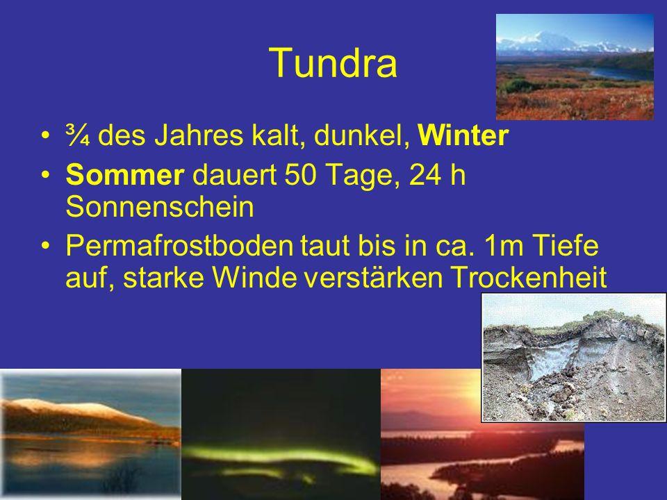 Tundra ¾ des Jahres kalt, dunkel, Winter Sommer dauert 50 Tage, 24 h Sonnenschein Permafrostboden taut bis in ca. 1m Tiefe auf, starke Winde verstärke