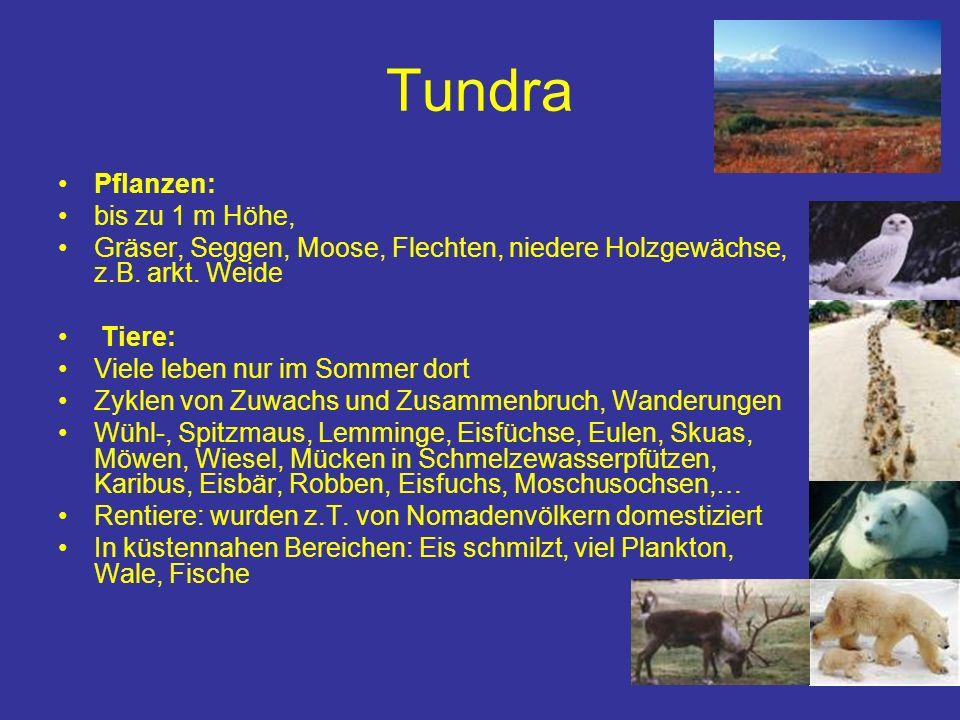 Tundra Pflanzen: bis zu 1 m Höhe, Gräser, Seggen, Moose, Flechten, niedere Holzgewächse, z.B. arkt. Weide Tiere: Viele leben nur im Sommer dort Zyklen