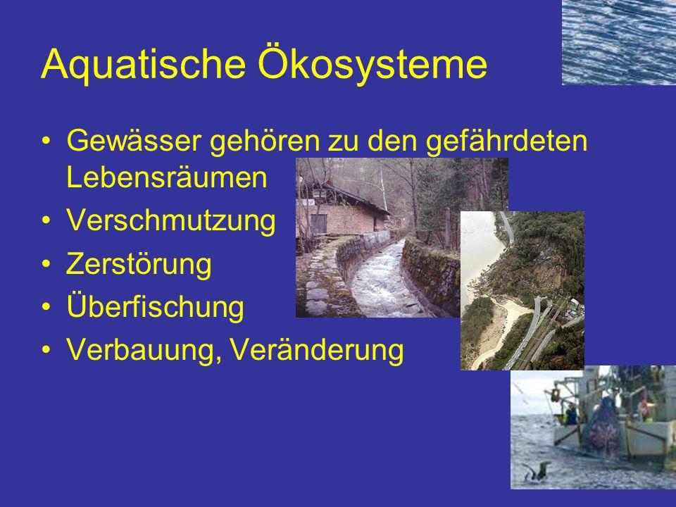 Aquatische Ökosysteme Gewässer gehören zu den gefährdeten Lebensräumen Verschmutzung Zerstörung Überfischung Verbauung, Veränderung