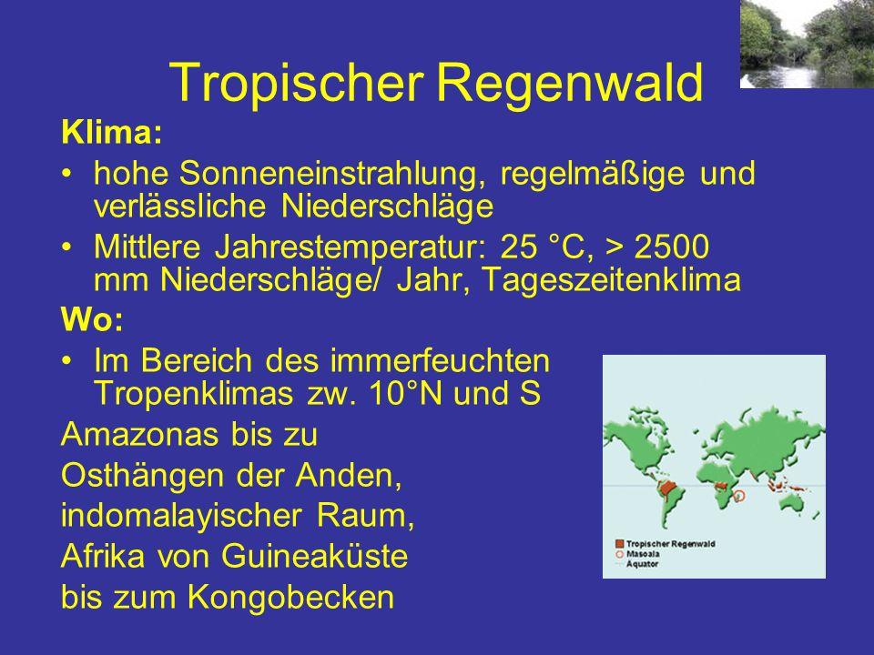 Tropischer Regenwald Klima: hohe Sonneneinstrahlung, regelmäßige und verlässliche Niederschläge Mittlere Jahrestemperatur: 25 °C, > 2500 mm Niederschl