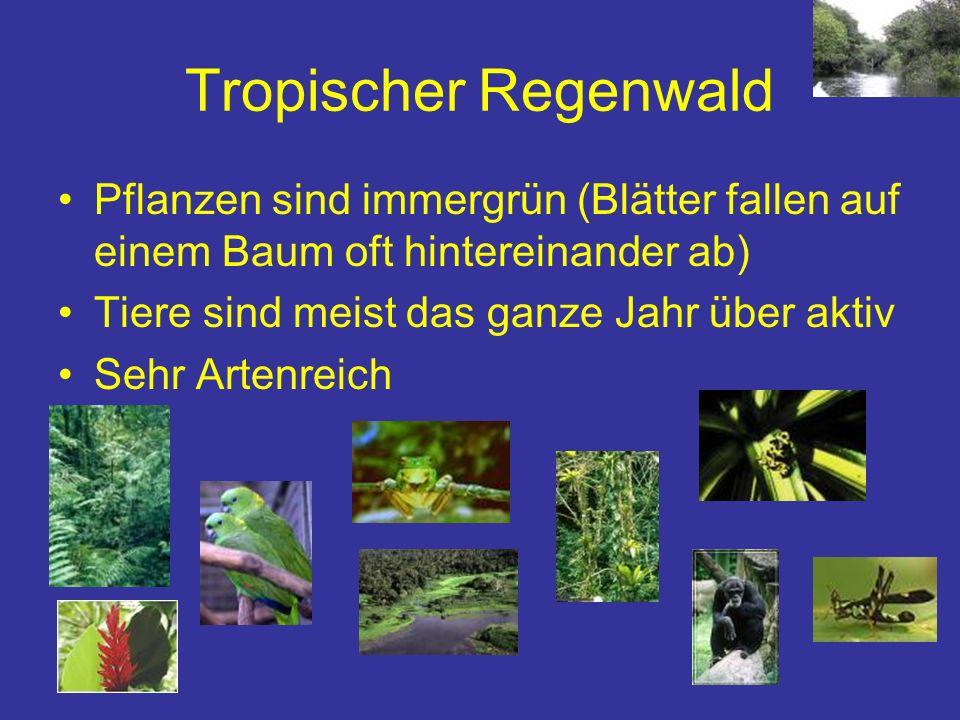 Pflanzen sind immergrün (Blätter fallen auf einem Baum oft hintereinander ab) Tiere sind meist das ganze Jahr über aktiv Sehr Artenreich Tropischer Re