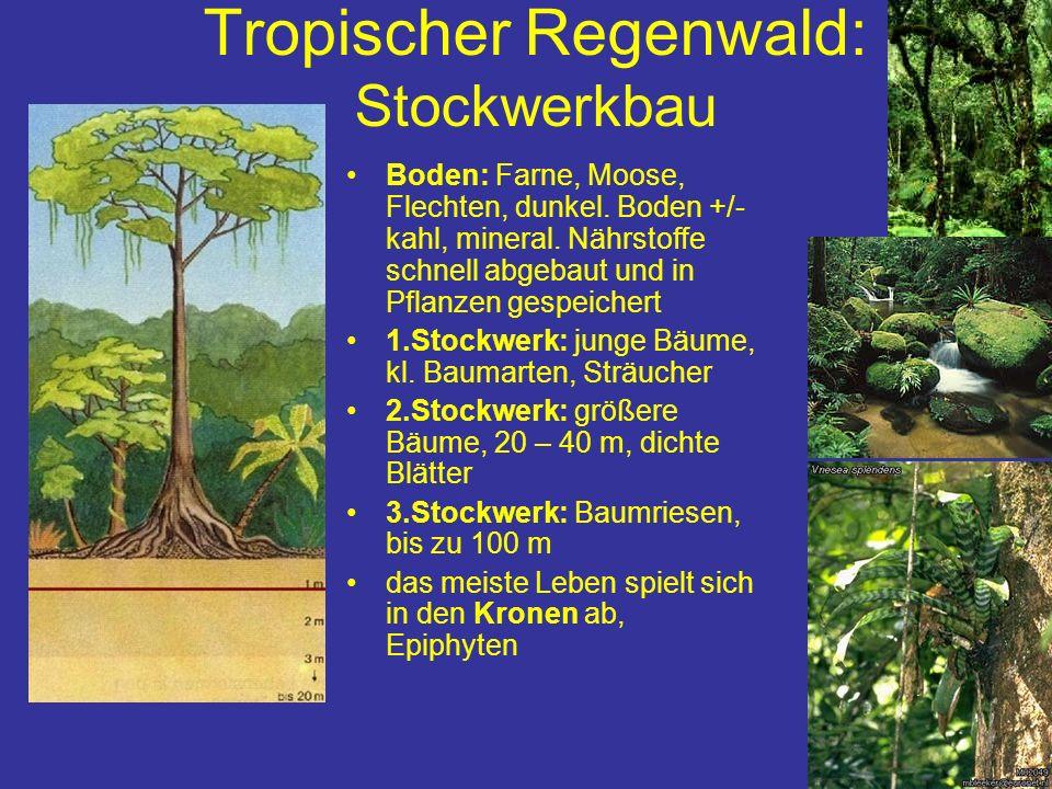 Tropischer Regenwald: Stockwerkbau Boden: Farne, Moose, Flechten, dunkel. Boden +/- kahl, mineral. Nährstoffe schnell abgebaut und in Pflanzen gespeic
