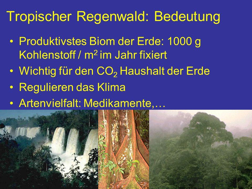 Tropischer Regenwald: Bedeutung Produktivstes Biom der Erde: 1000 g Kohlenstoff / m 2 im Jahr fixiert Wichtig für den CO 2 Haushalt der Erde Reguliere