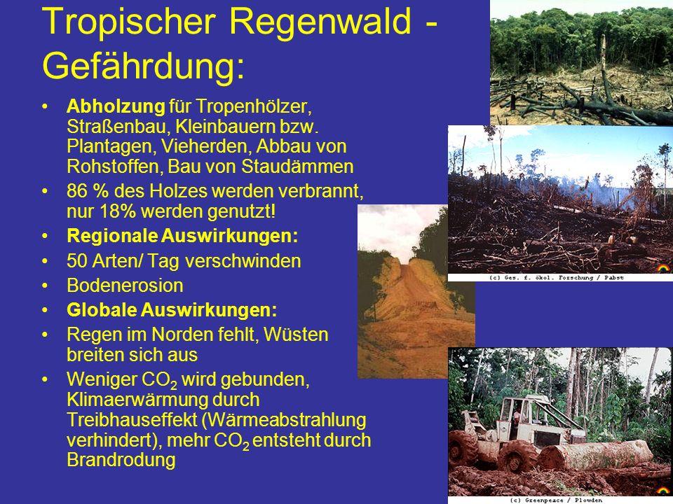 Tropischer Regenwald - Gefährdung: Abholzung für Tropenhölzer, Straßenbau, Kleinbauern bzw. Plantagen, Vieherden, Abbau von Rohstoffen, Bau von Staudä