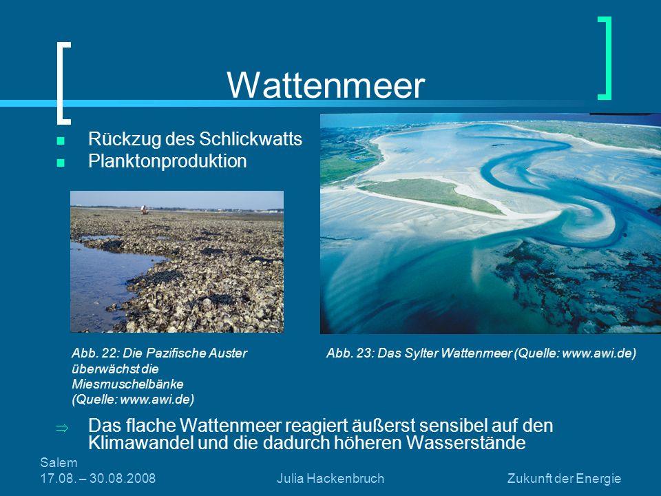 Salem 17.08. – 30.08.2008Julia HackenbruchZukunft der Energie Wattenmeer Rückzug des Schlickwatts Planktonproduktion Das flache Wattenmeer reagiert äu