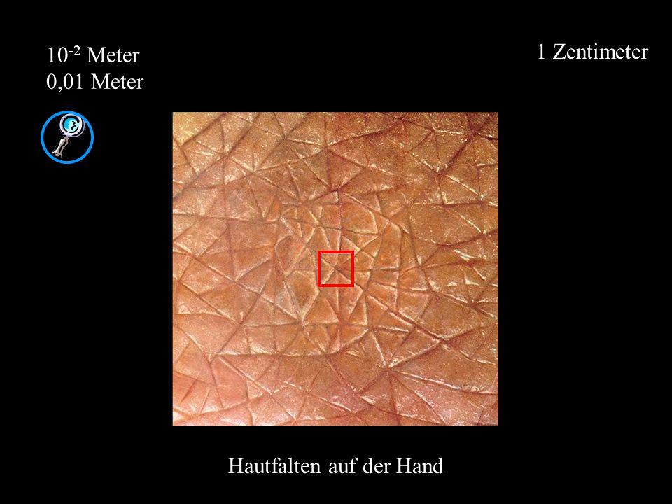 1 Zentimeter 10 -2 Meter 0,01 Meter Hautfalten auf der Hand