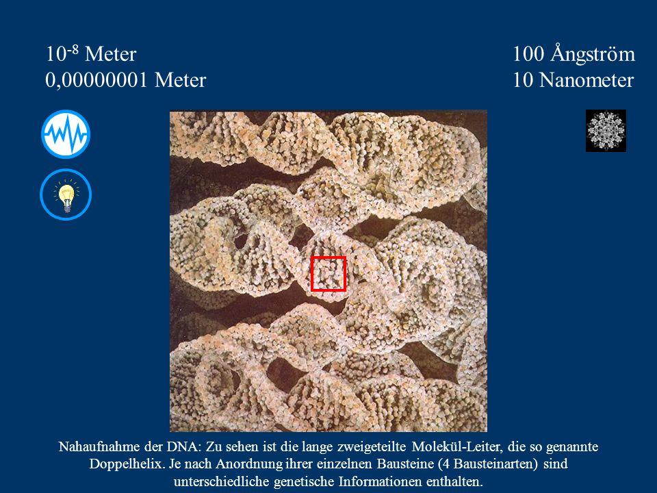 100 Ångström 10 Nanometer 10 -8 Meter 0,00000001 Meter Nahaufnahme der DNA: Zu sehen ist die lange zweigeteilte Molekül-Leiter, die so genannte Doppelhelix.