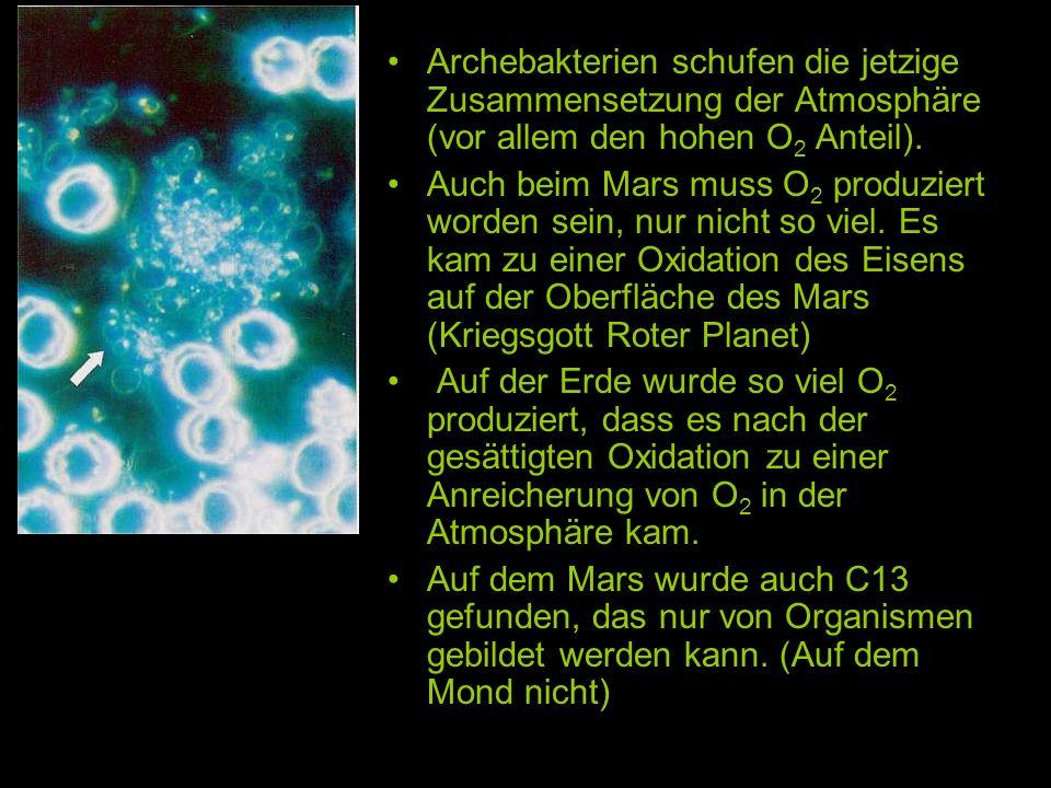 Archebakterien schufen die jetzige Zusammensetzung der Atmosphäre (vor allem den hohen O 2 Anteil). Auch beim Mars muss O 2 produziert worden sein, nu