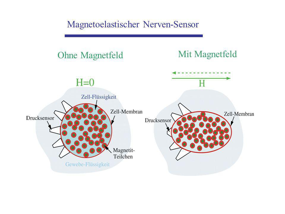 Magnetoelastischer Nerven-Sensor Mit Magnetfeld Ohne Magnetfeld
