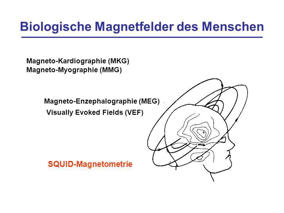 Biologische Magnetfelder des Menschen Magneto-Kardiographie (MKG) Magneto-Myographie (MMG) Visually Evoked Fields (VEF) Magneto-Enzephalographie (MEG)