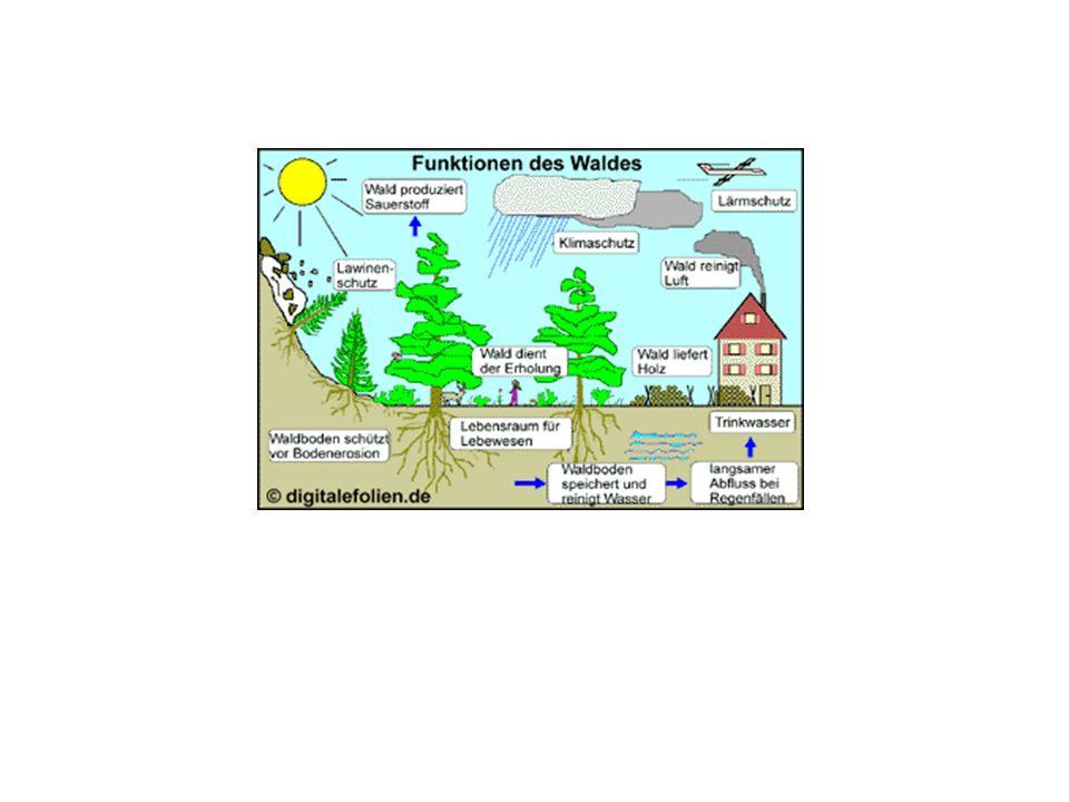 Waldsterben Lösungsmöglichkeiten: Energiesparen Verzicht auf umweltschädliche Energieträger Verringerung des Pkw- und Lkw-Verkehrs