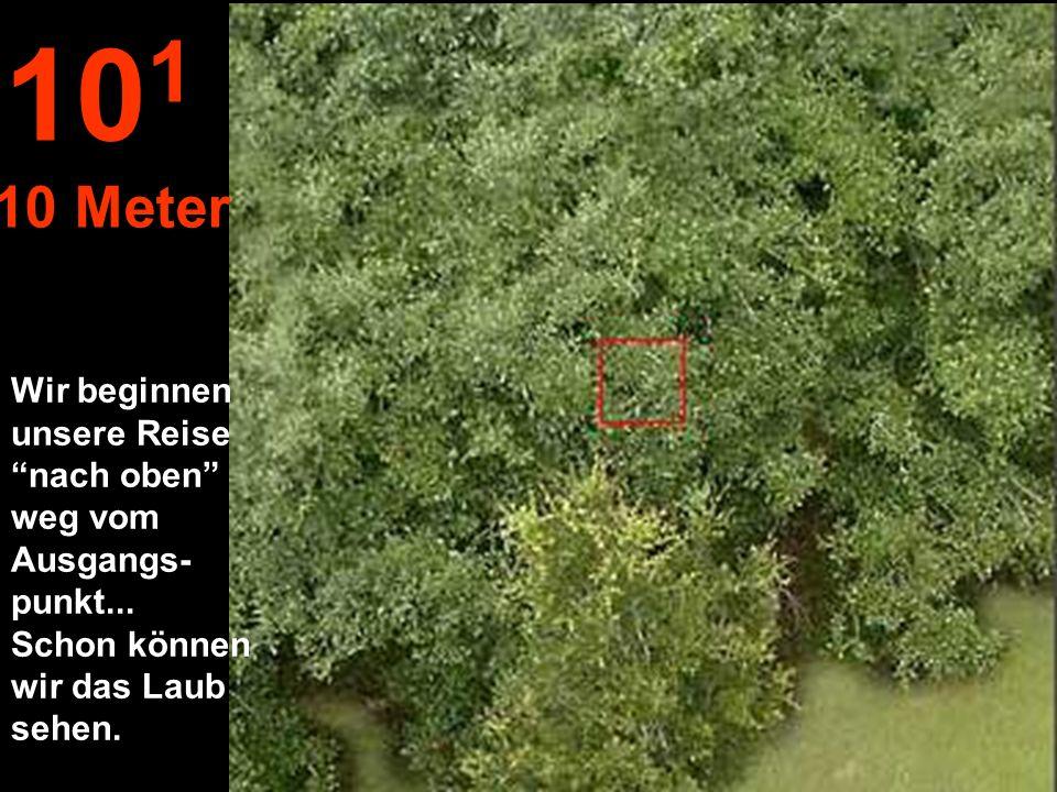 Abstand zu einem Zweig mit Blättern, mit ausgestreck- tem Arm... 10 0 1 Meter