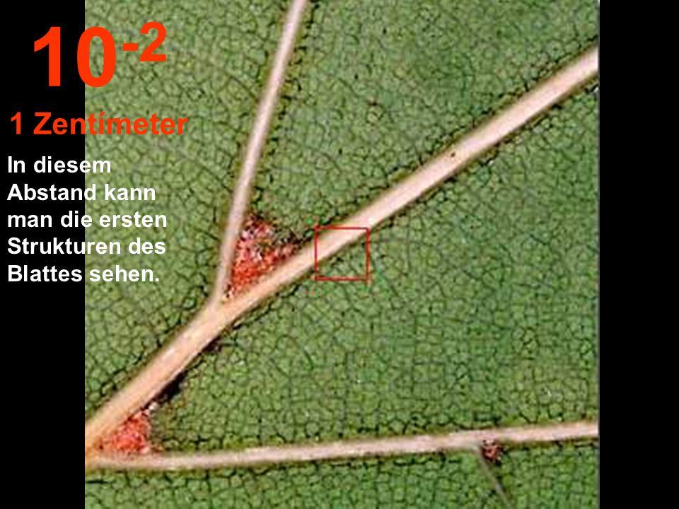 Auf 10 cm nahe gekommen können wir ein Blatt am Zweig zeichnen 10 -1 10 Zentímeter