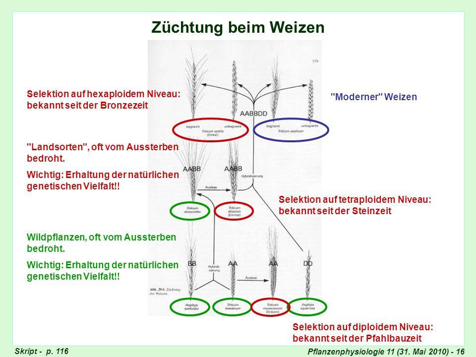 Pflanzenphysiologie 11 (31. Mai 2010) - 16 Züchtung beim Weizen Wildpflanzen, oft vom Aussterben bedroht. Wichtig: Erhaltung der natürlichen genetisch