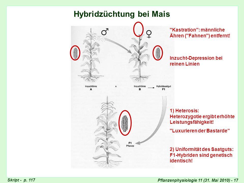 Pflanzenphysiologie 11 (31. Mai 2010) - 17 Hybridzüchtung bei Mais