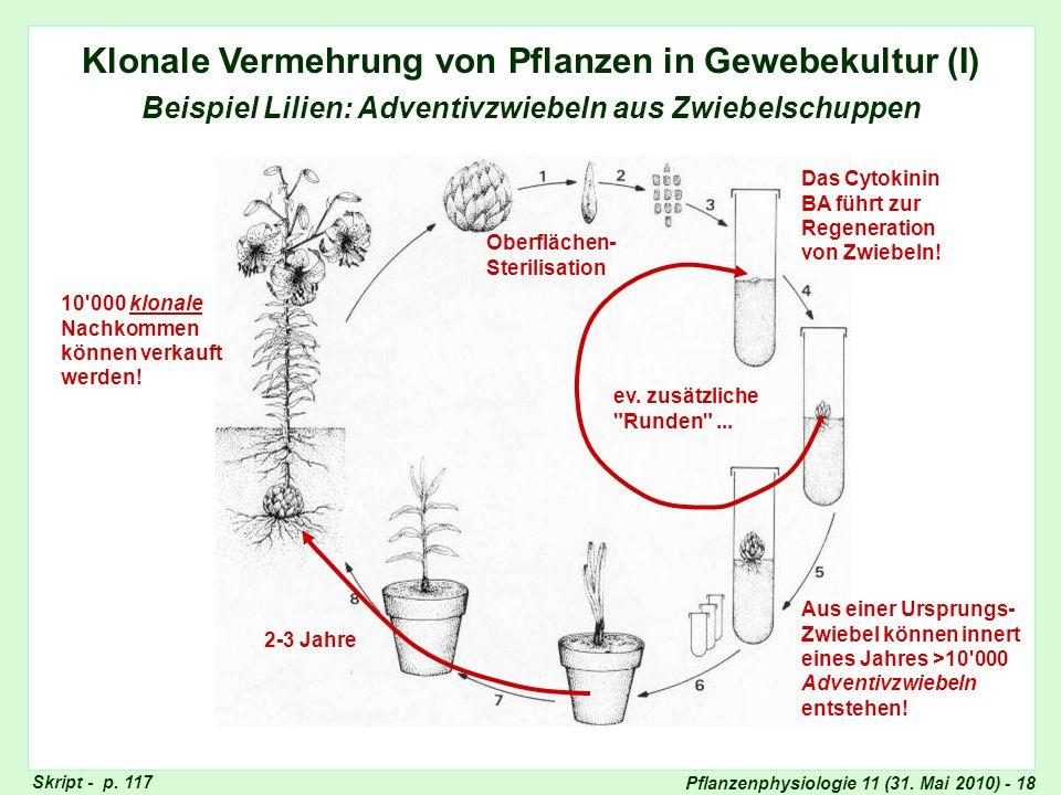 Pflanzenphysiologie 11 (31. Mai 2010) - 18 Klonale Vermehrung von Pflanzen in Gewebekultur (I) Beispiel Lilien: Adventivzwiebeln aus Zwiebelschuppen O