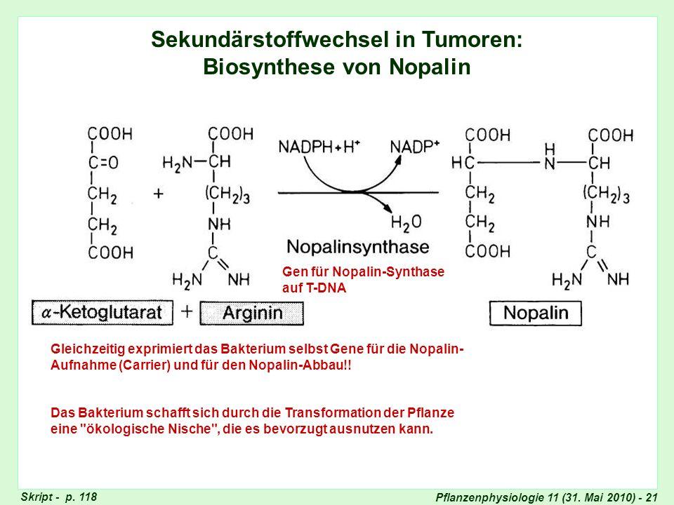 Pflanzenphysiologie 11 (31. Mai 2010) - 21 Sekundärstoffwechsel in Tumoren: Biosynthese von Nopalin Gen für Nopalin-Synthase auf T-DNA Gleichzeitig ex