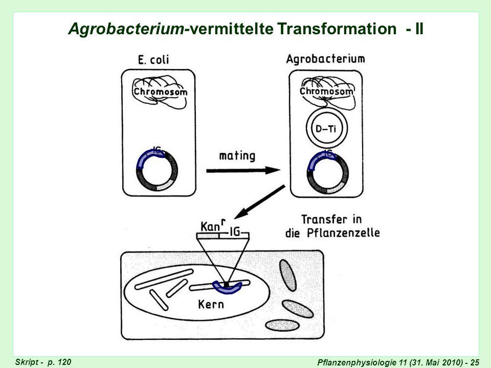 Pflanzenphysiologie 11 (31. Mai 2010) - 25 Agrobacterium-vermittelte Transformation - II Skript - p. 120