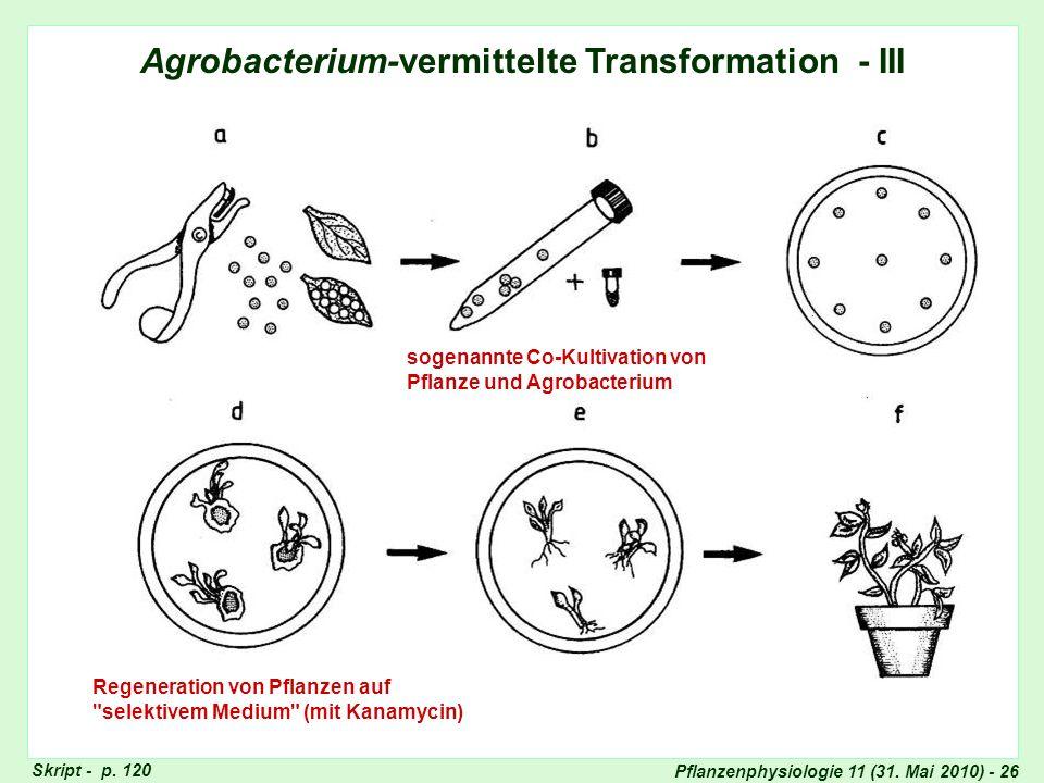 Pflanzenphysiologie 11 (31. Mai 2010) - 26 Agrobacterium-vermittelte Transformation - III sogenannte Co-Kultivation von Pflanze und Agrobacterium Rege
