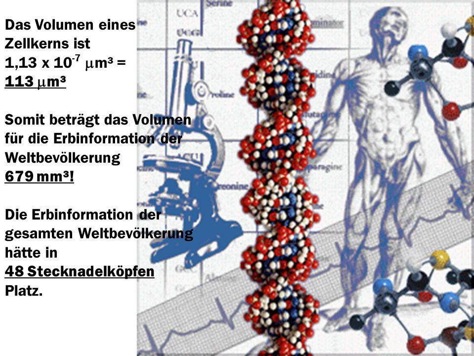 Das Volumen eines Zellkerns ist 1,13 x 10 -7 m³ = 113 m³ Somit beträgt das Volumen für die Erbinformation der Weltbevölkerung 679 mm³! Die Erbinformat