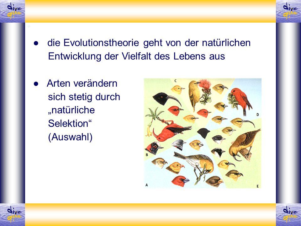 Arten verändern sich stetig durch natürliche Selektion (Auswahl) die Evolutionstheorie geht von der natürlichen Entwicklung der Vielfalt des Lebens au