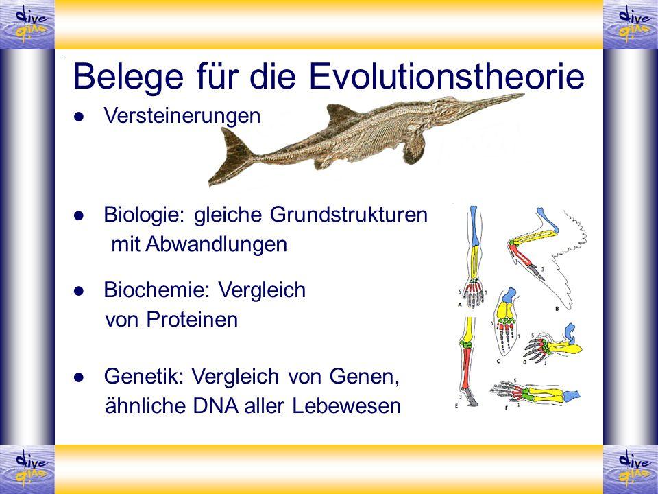 Belege für die Evolutionstheorie Versteinerungen Biologie: gleiche Grundstrukturen mit Abwandlungen Biochemie: Vergleich von Proteinen Genetik: Vergle
