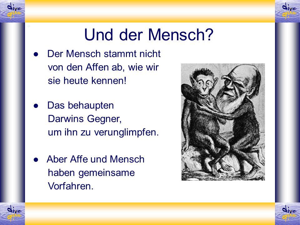 Der Mensch stammt nicht von den Affen ab, wie wir sie heute kennen! Aber Affe und Mensch haben gemeinsame Vorfahren. Und der Mensch? Das behaupten Dar
