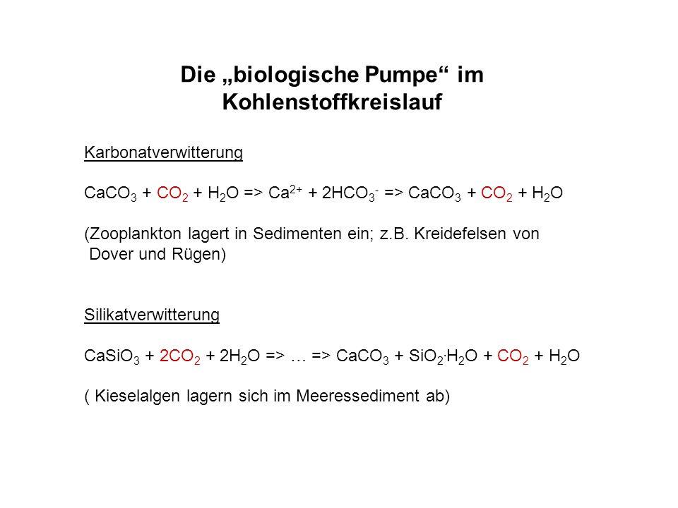 Die biologische Pumpe im Kohlenstoffkreislauf Karbonatverwitterung CaCO 3 + CO 2 + H 2 O => Ca 2+ + 2HCO 3 - => CaCO 3 + CO 2 + H 2 O (Zooplankton lag