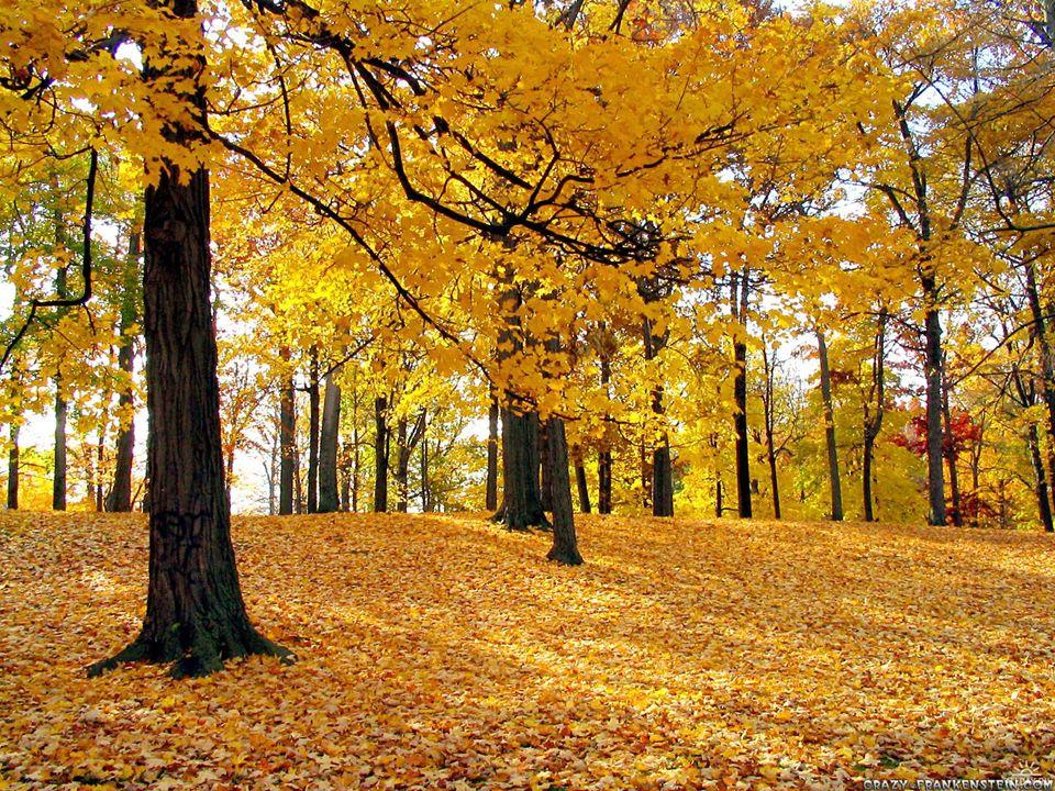 1.Der März war der zweite Monat im alten Rom. 2. Der Herbst beginnt in Europa am 23.