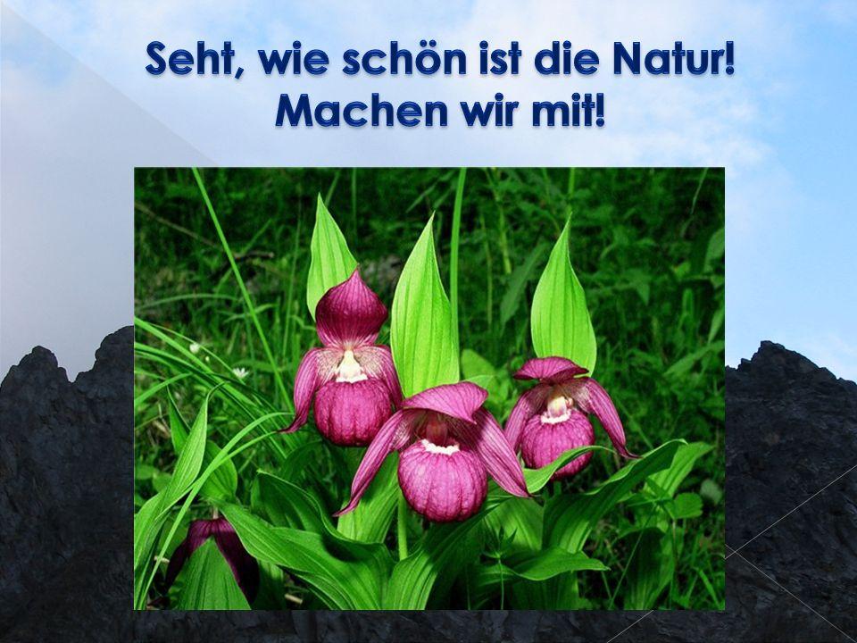 1.Das Gesetz Über den Schutz der Umwelt von 10.01.2002 N 7-FG 2.