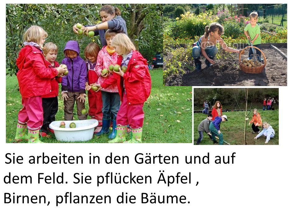 Sie arbeiten in den Gärten und auf dem Feld. Sie pflücken Äpfel, Birnen, pflanzen die Bäume.